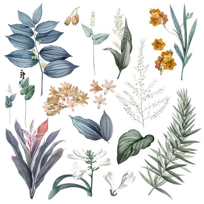 βότανα που συμβάλλουν στην ψυχική υγεία μας