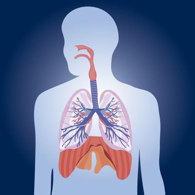 Η εισαγωγή βελόνας στο βελονιστικό σημείο Πνεύμονας P7 έχει θετικά αποτελέσματα στην αντιμετώπιση χρόνιων ασθενειών πνευμόνων και αναπνευστικού συστήματος.